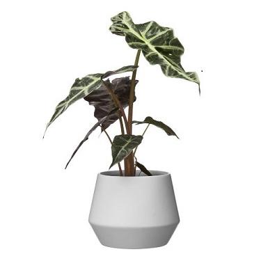 Whidel Dima Pot White